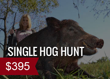 Single Hog Hunt