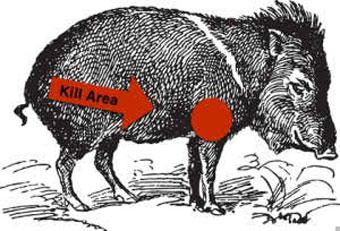 Hog Wild Preserve Hog Hunting | The best place to shoot a wild hog ...